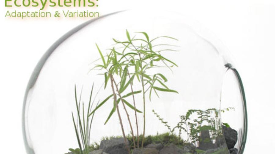 terrarium-eco-system